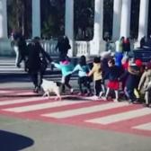 ¡El mejor policía! Perrito detiene el tráfico para que niños crucen la calle