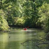 ¡Qué susto! Cocodrilo se lanza contra Kayak de un turista