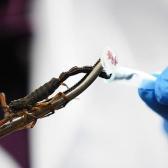 Científicos de la UNAM crean toxina que inhibe el cáncer usando veneno de alacrán