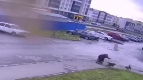 Hombre en silla de ruedas salva a su perrito de una jauría
