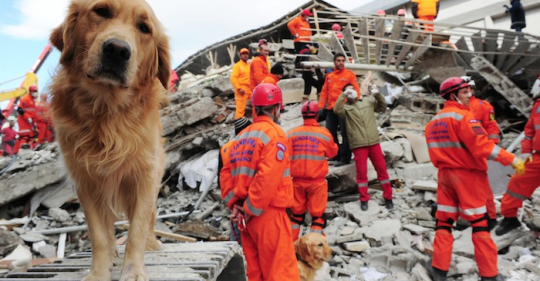 Perros rescatistas a la busqueda de sobrevivientes