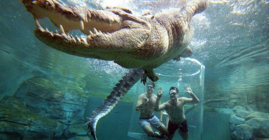 Turistas nadan con cocodrilos en