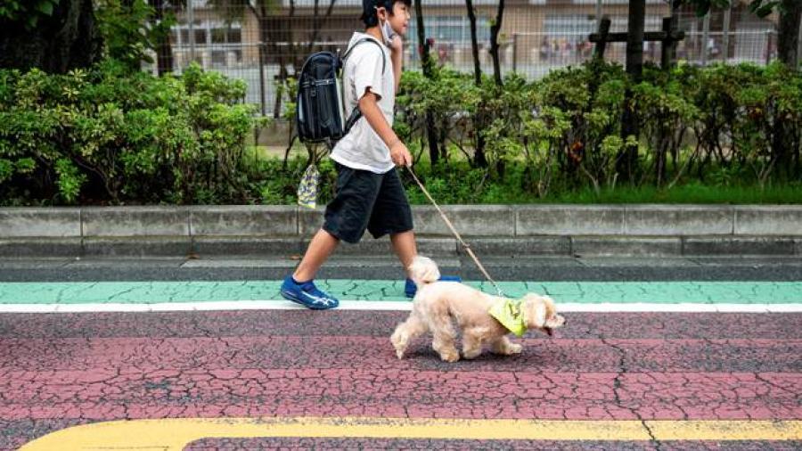 Comienzan iniciativa con perros que cuidan a niños en Japón