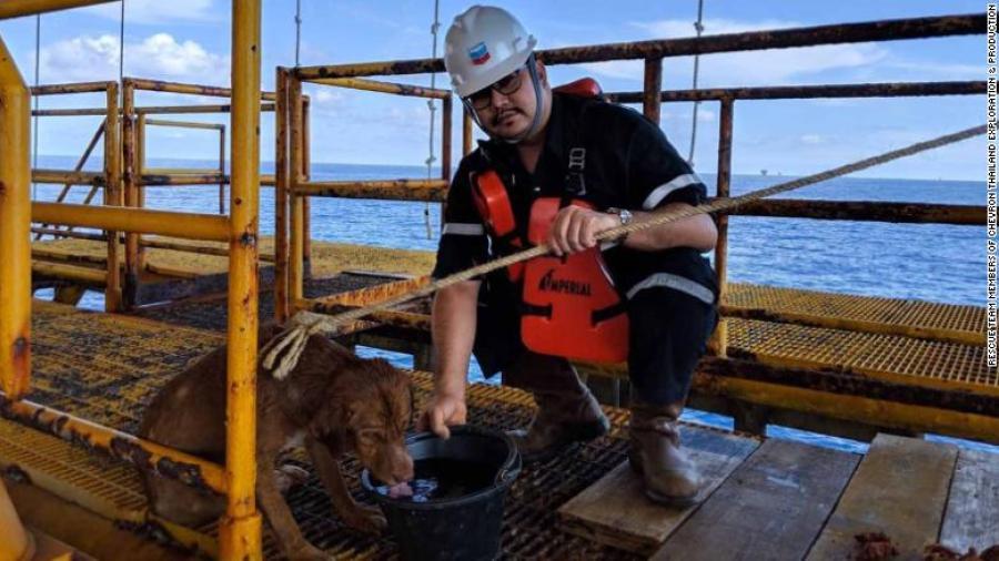 Trabajadores de plataforma acogen a perro que llegó nadando
