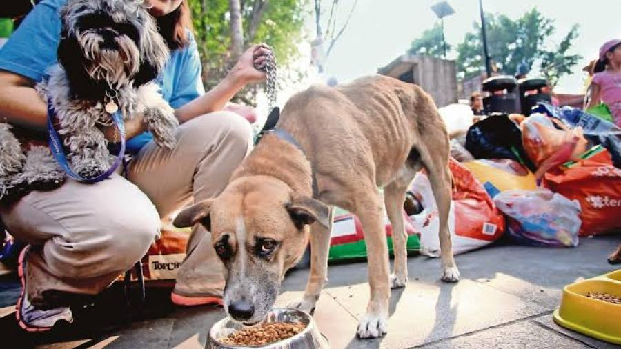 Busca Hacienda eliminar IVA en alimento para mascotas