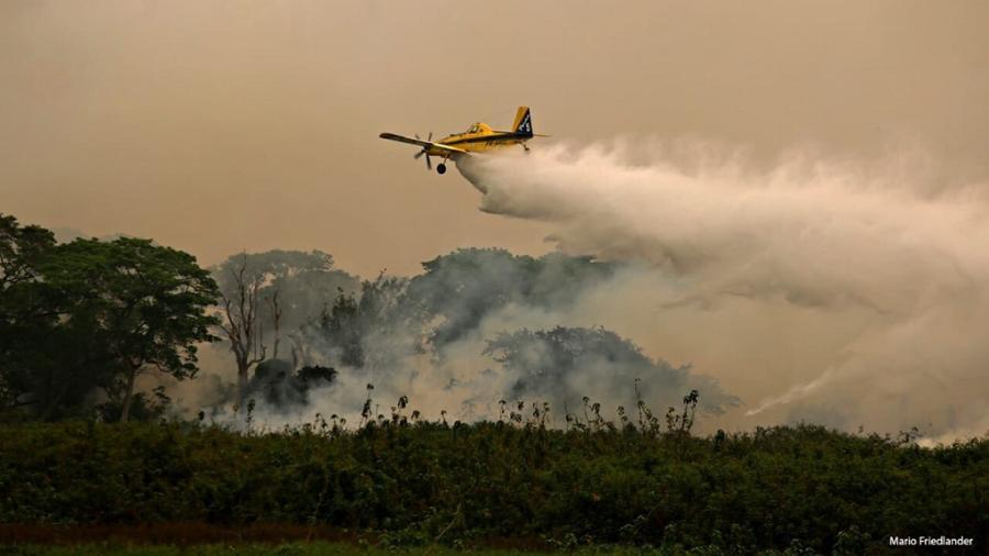 Se incendia en Brasil parque con gran población de jaguares