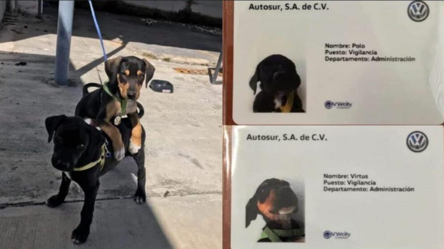 Agencia de autos adopta dos perros y los registra como empleados