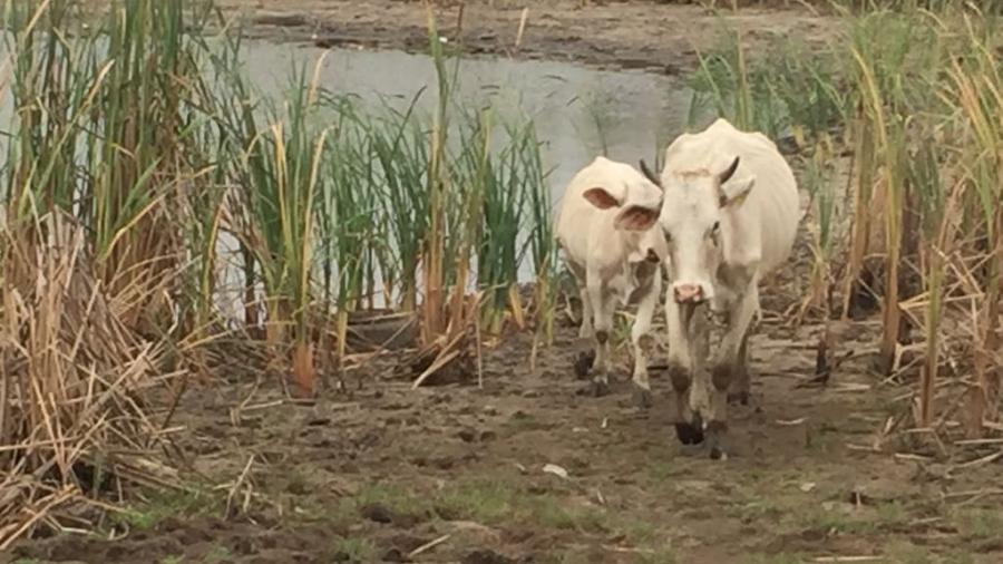 Falta de lluvia afecta al sector agrícola y ganadero del sur de Tamaulipas