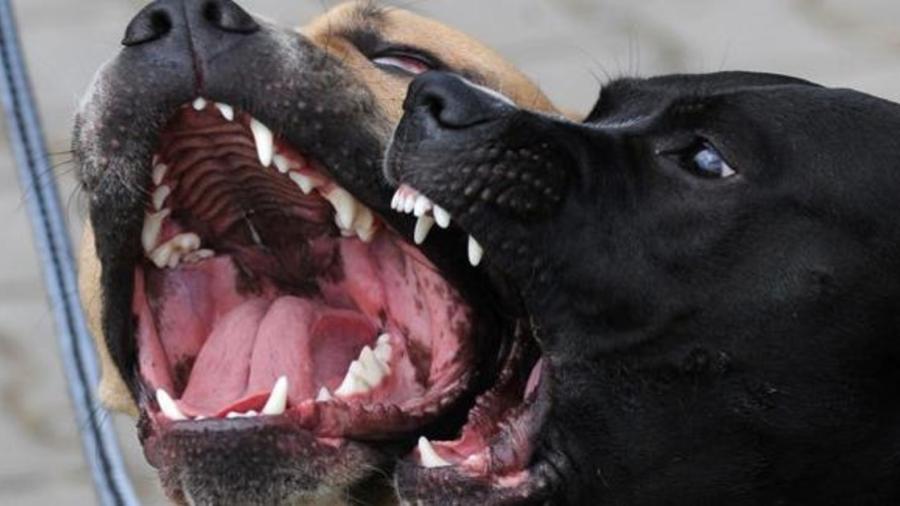 Mujer es asesinada por jauría de perros