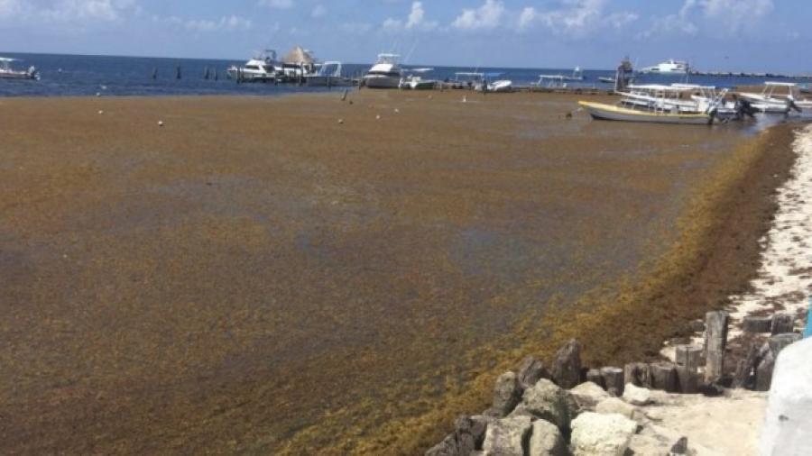 Quintana Roo se prepara para llegada del sargazo