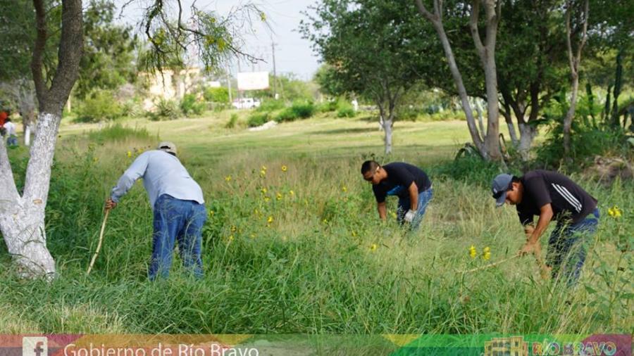 Realizan labores de limpieza en áreas verdes