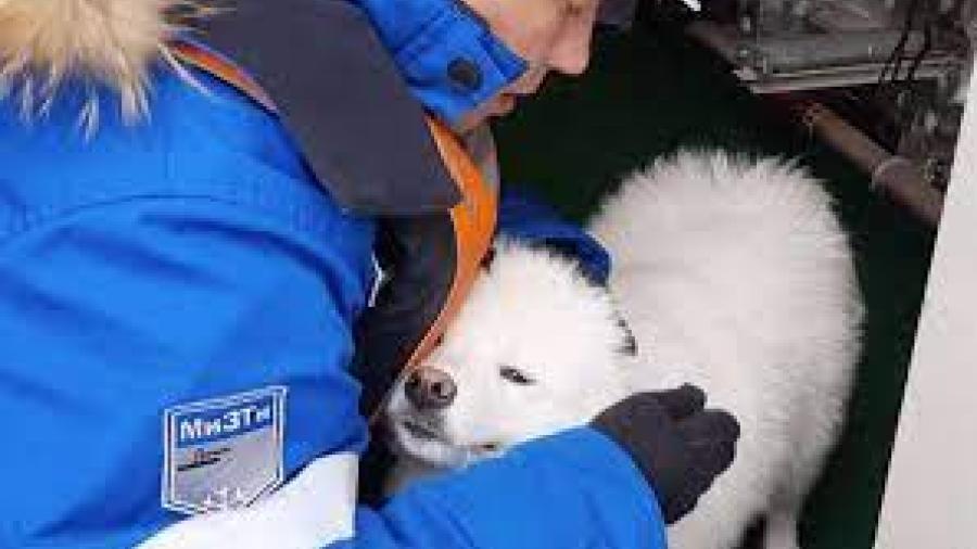 Marineros rusos rescatan a perrita perdida en el Ártico