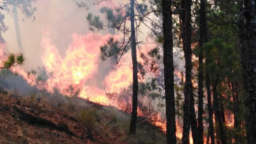 2 mil evacuado en Veracruz por incendio forestal