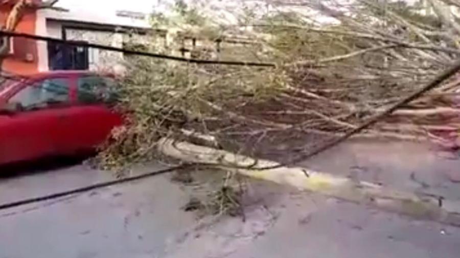 Frente Frío 44 provoca caída de árboles y vialidades cerradas en Victoria