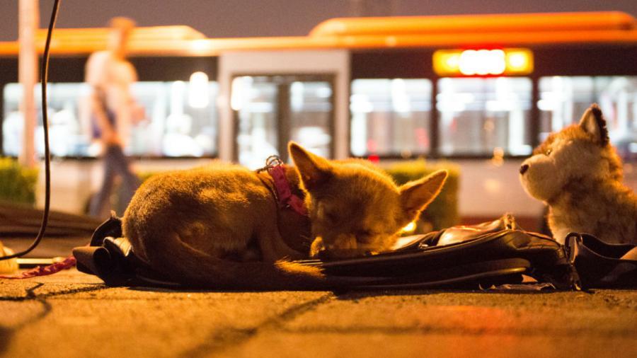 Ciudad en China anuncia prohíbe consumo de especies de animales como perros y gatos
