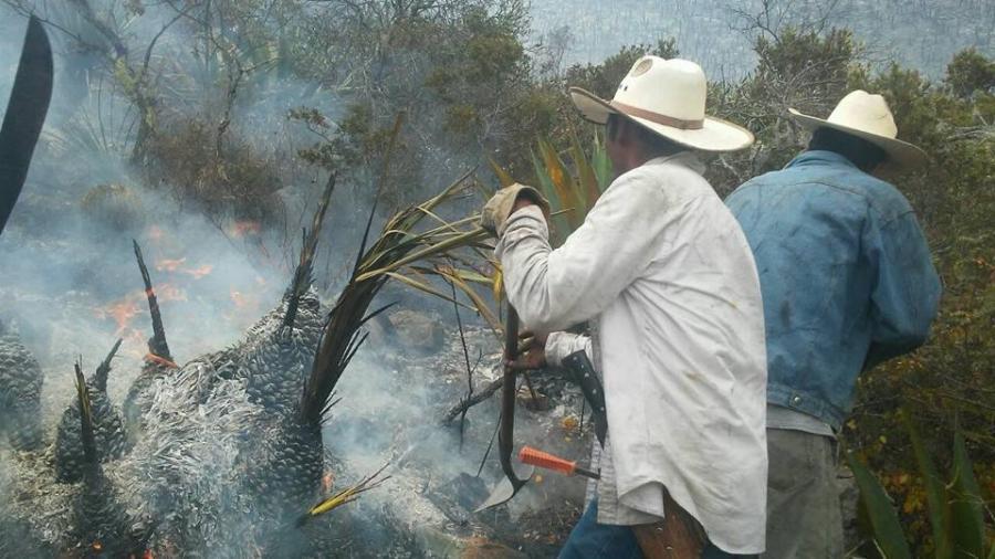 Temporada de Incendios Forestales registra 10 siniestros