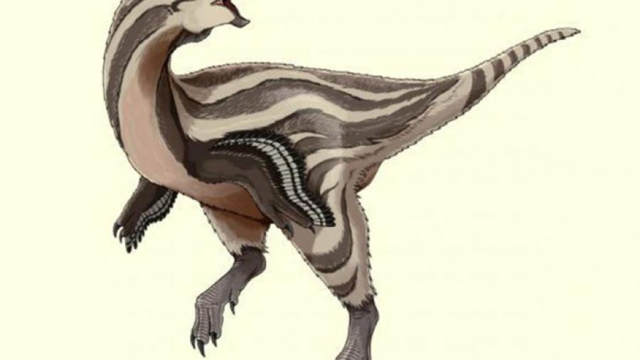 Descubren nueva especie de dinosaurio, ¿con plumas?