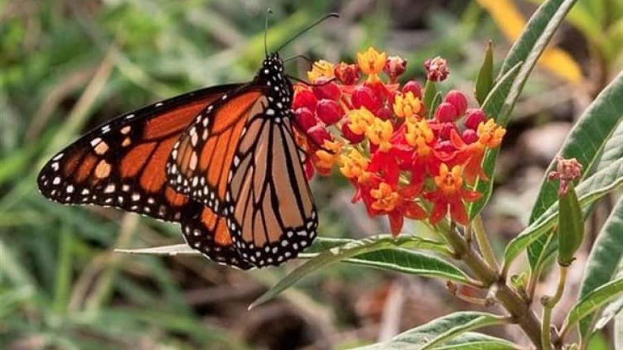 Centro Nacional de Mariposas de Texas presenta dificultades financieras