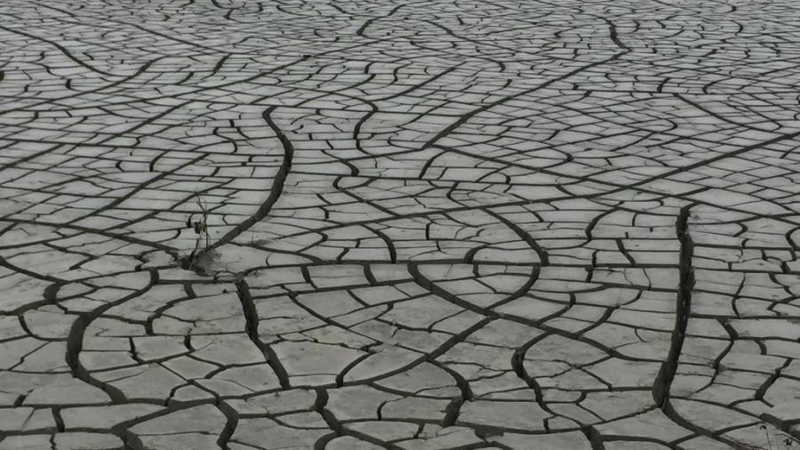 Por sequía se vislumbra panorama difícil para sector ganadero.