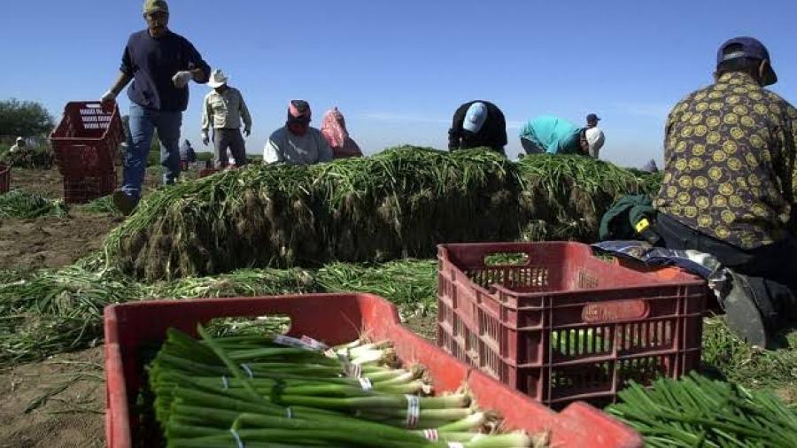 Mercado de agricultores del Valle llevarán a cabo clínica de vacunación anticovid