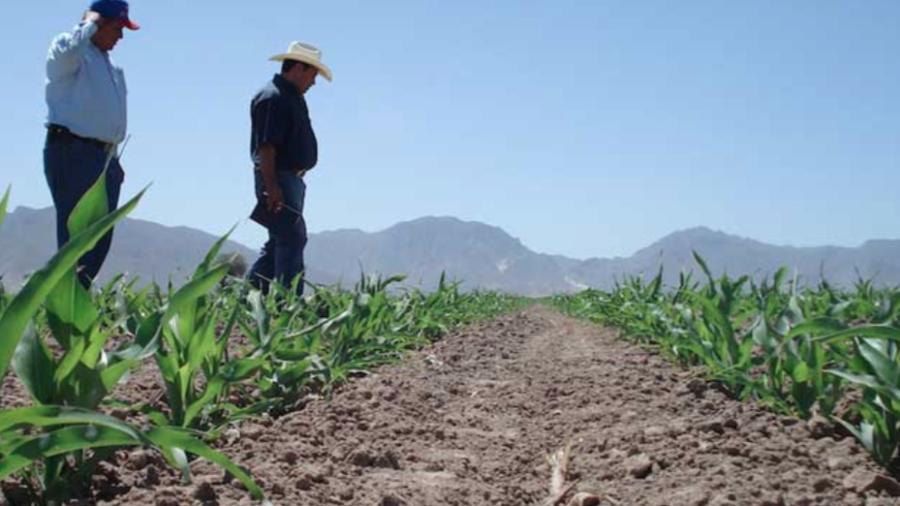 Agricultores sufren los estragos de los bajos niveles en los sistemas lagunarios de Altamira