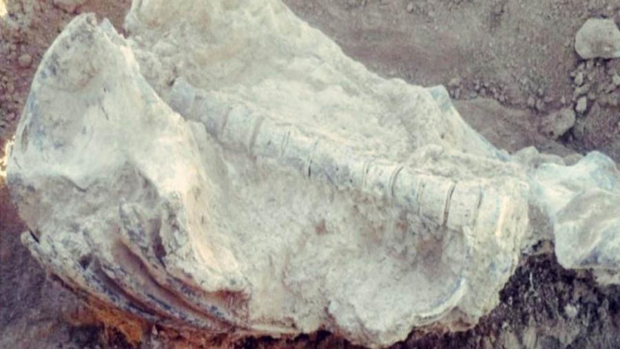 Encuentran piezas arqueológicas en Bolivia