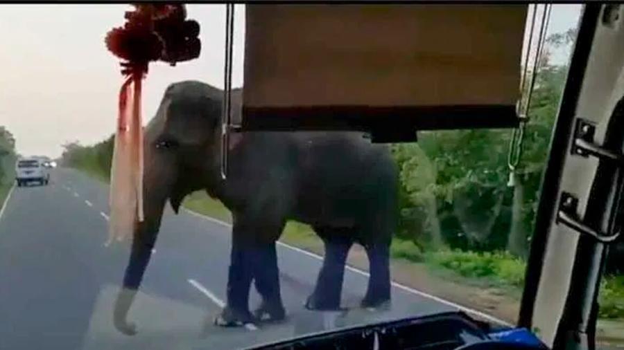 Elefante detiene un autobús y roba racimos de plátanos a turistas