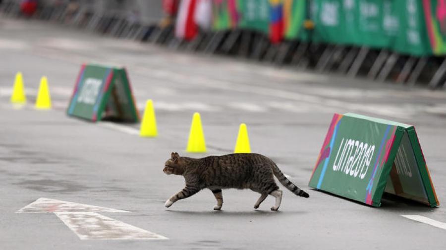 Gato atraviesa una pista de atletismo al final de una carrera
