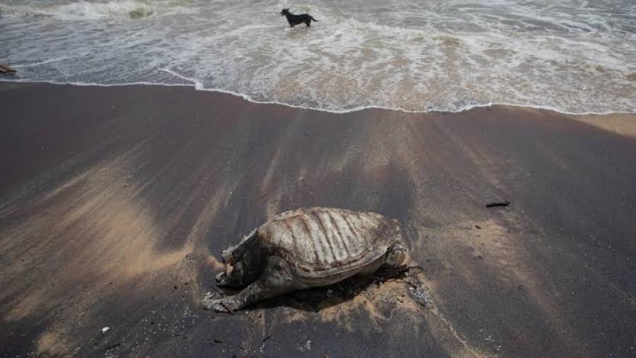 Mueren tortugas tras incendio de barco en costas de Sri Lanka