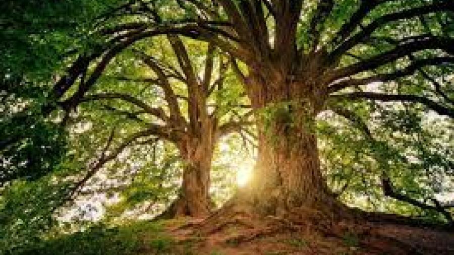 Niños aprenden la importancia de los árboles