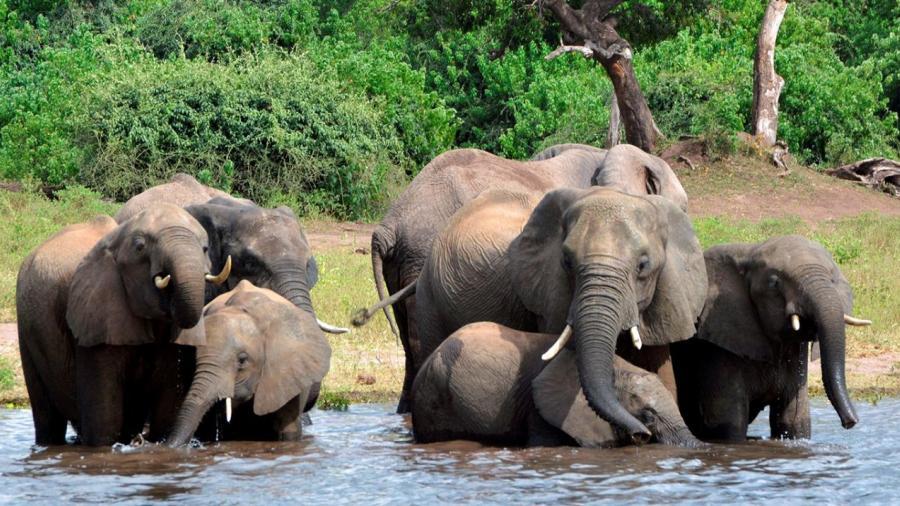 Botswana vuelve a autorizar la caza de elefantes