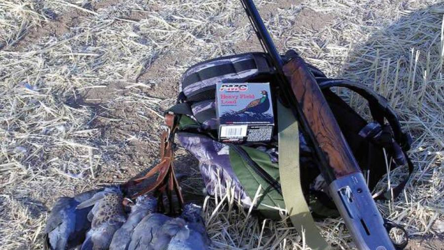Temporada de caza de paloma ala blanca inicia este 13 de agosto en Nuevo Laredo