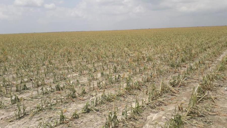 Busca municipio brindar apoyos para productores del campo