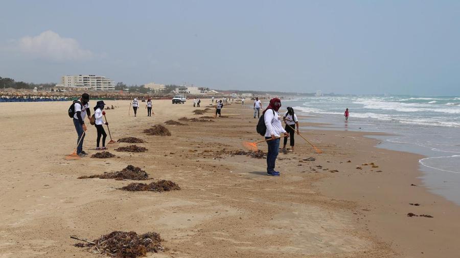 Retiran sargazo de playa Miramar