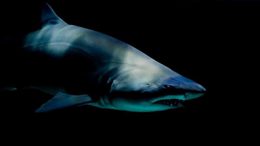 Tiburón muerde a niño en EU, tercer ataque en un mes