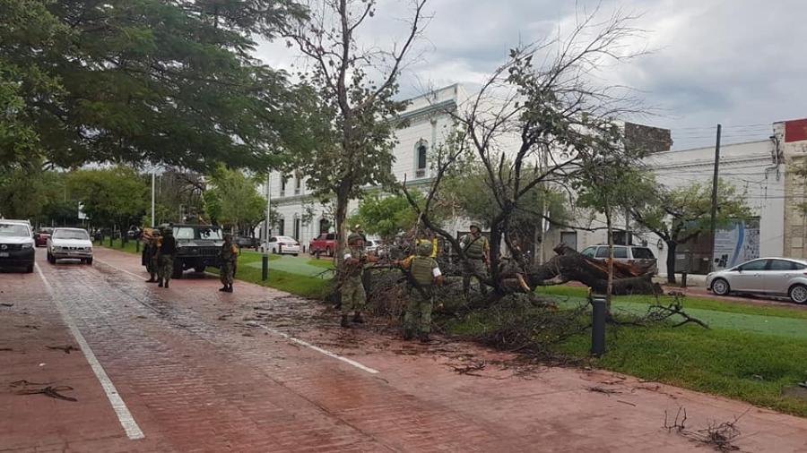 Fuerte lluvia deja 14 árboles caídos en Victoria