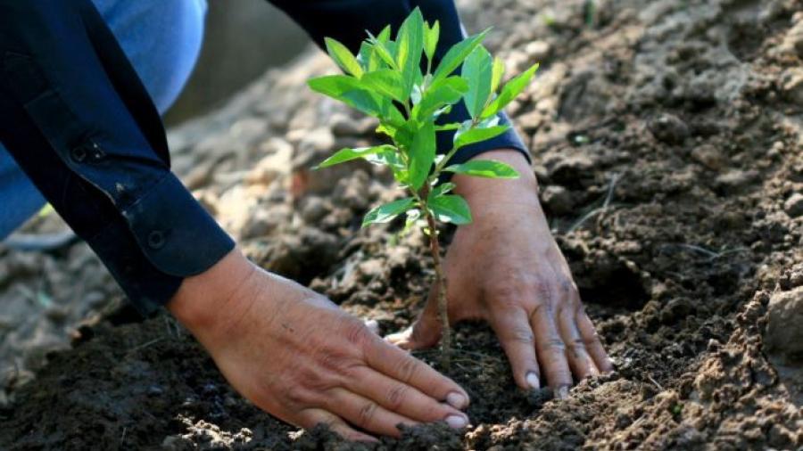 Propondrá AMLO a Biden implementación del programa 'Sembrando Vida' en Centroamérica