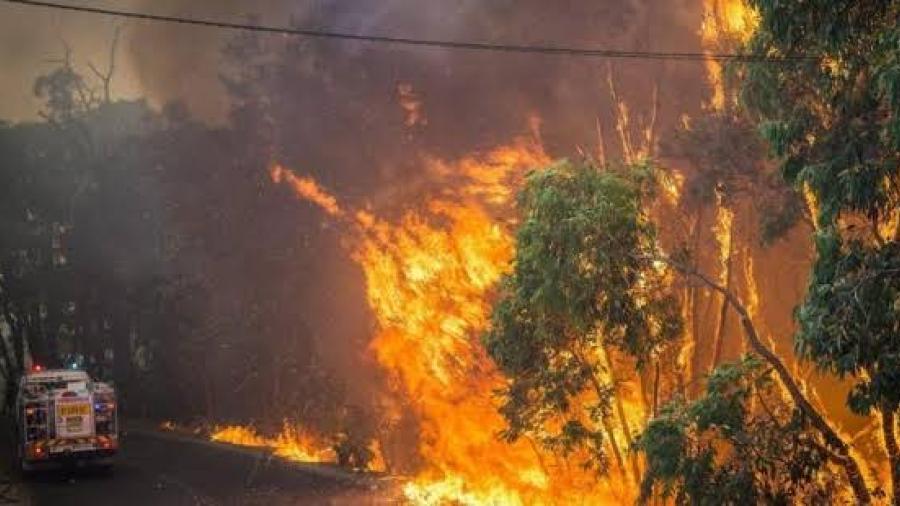 Australia declara estado de emergencia ante ola de incendios forestales