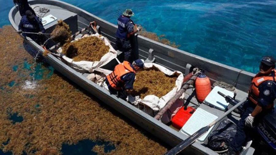 Más de 6 mil toneladas de sargazo recolectadas en Quintana Roo