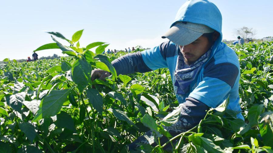 Retornan de Canadá, agricultores beneficiarios del programa PTAT