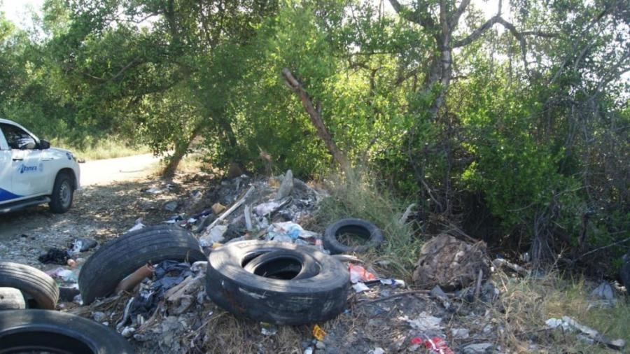 Implementa Dirección de Ecología acciones para contribuir a la conservación del ecosistema