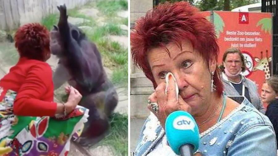 Expulsan a mujer de zoológico por mantener relación con un primate