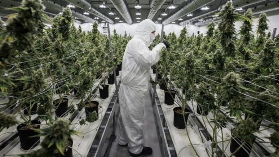 Washington ofrece cigarros de mariguana a quienes se vacunen contra el COVID-19