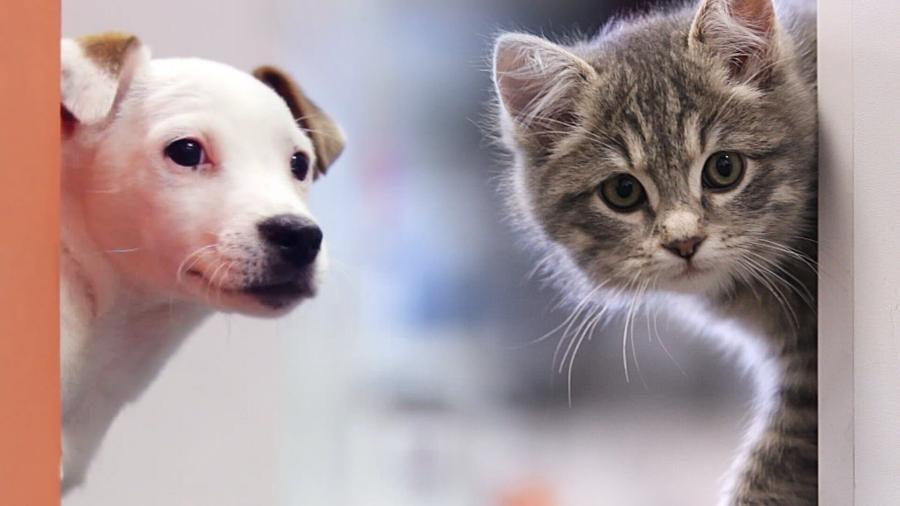 SCJN aprueba IVA a alimentos de animales domésticos