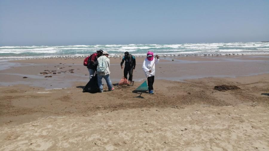 Retiran sargazo en Playa Miramar ante proximidad de la semana santa
