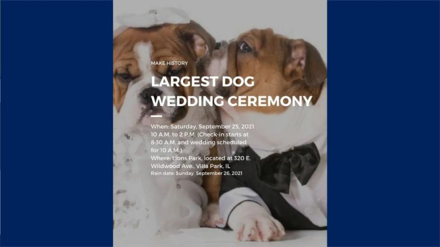 Quieren romper Récord Guinness en asistentes para una boda de perros