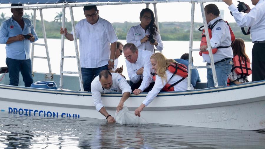 Liberan 50 mil crías de tilapia en sistema lagunario Champayán.