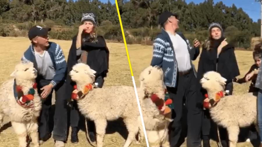 Alpaca escupe a Sergio Mayer