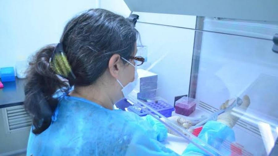 Tamaulipas registra 196 nuevos casos de COVID-19