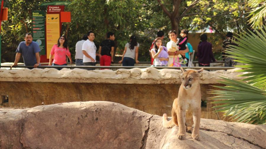 """Zooabuelos"" son educadores perfectos en Tamatán"